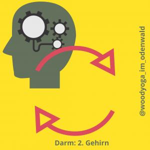 Darm als 2. Gehirn